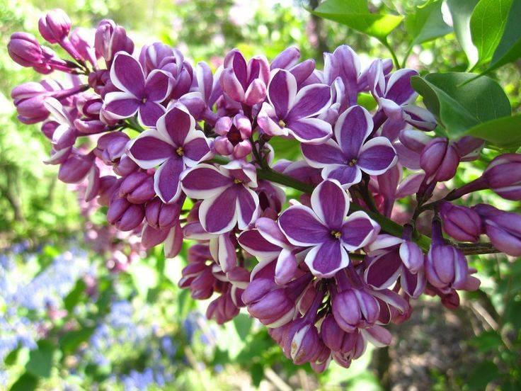 Как и чем подкармливать плодовые деревья и кустарники в весеннее время?