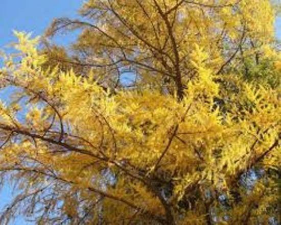 Уход за денежным деревом в зимний период времени