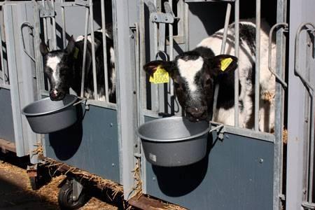Отравление у коровы: первая симптомы и лечение - общая информация - 2020