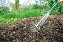 Температура почвы для посадки картофеля весной