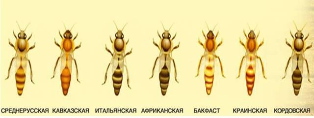 Интересные факты о пчёлах и их жизни должны знать все! экопарк  z