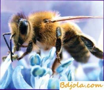 Как собирают пчелиную пыльцу?