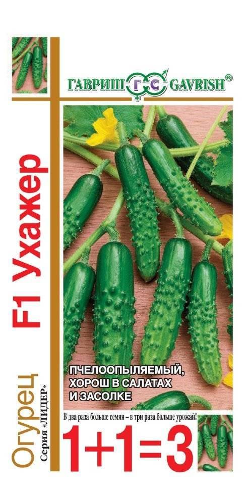 Огурец адам f1: отзывы, описание сорта, фото, выращивание
