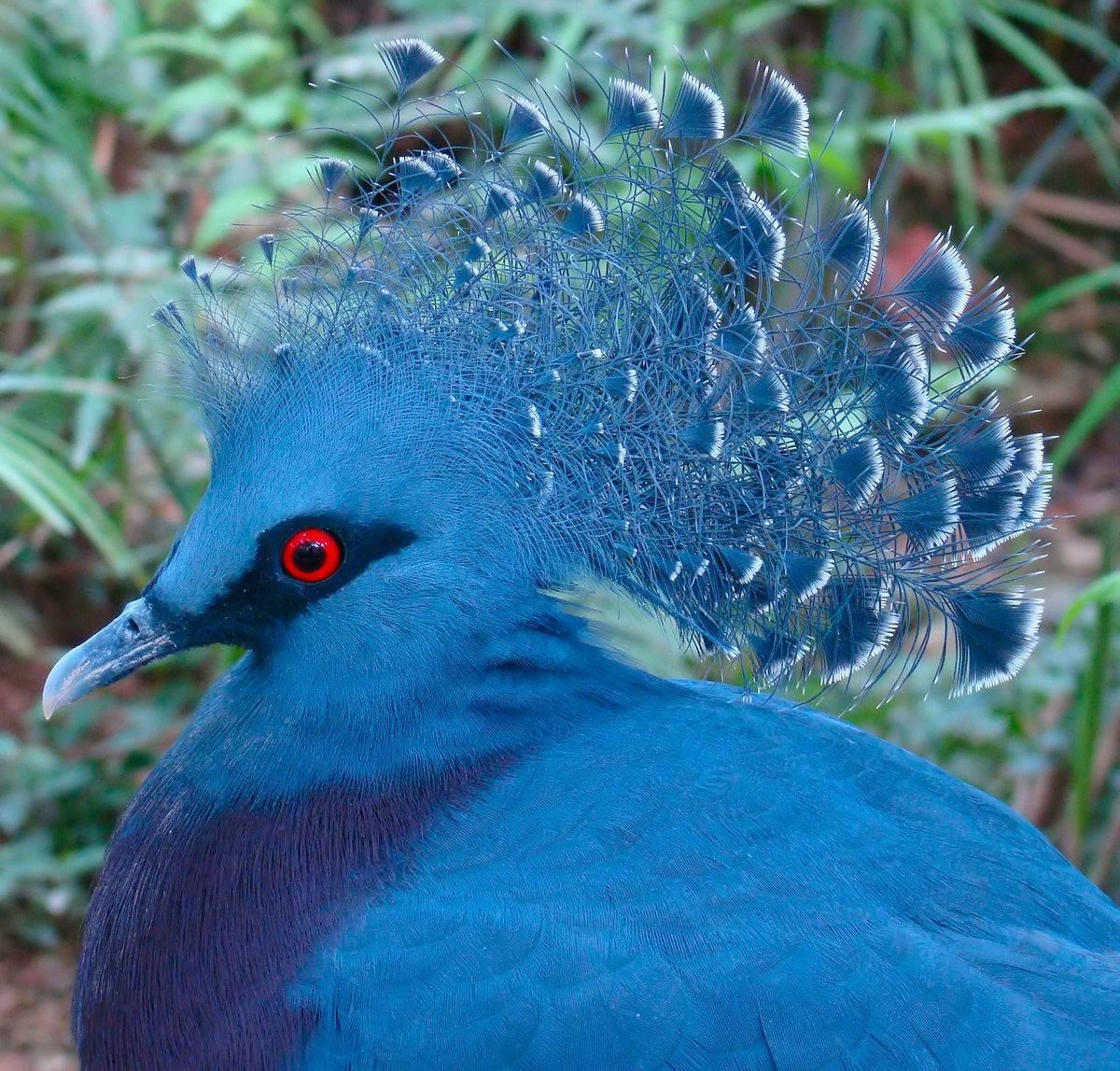 Голубь – птица мира или драчун?