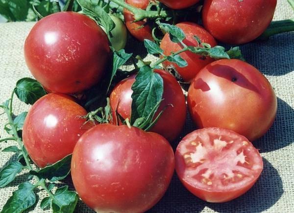 О сорте томата титан: характеристики помидора, уход и выращивание