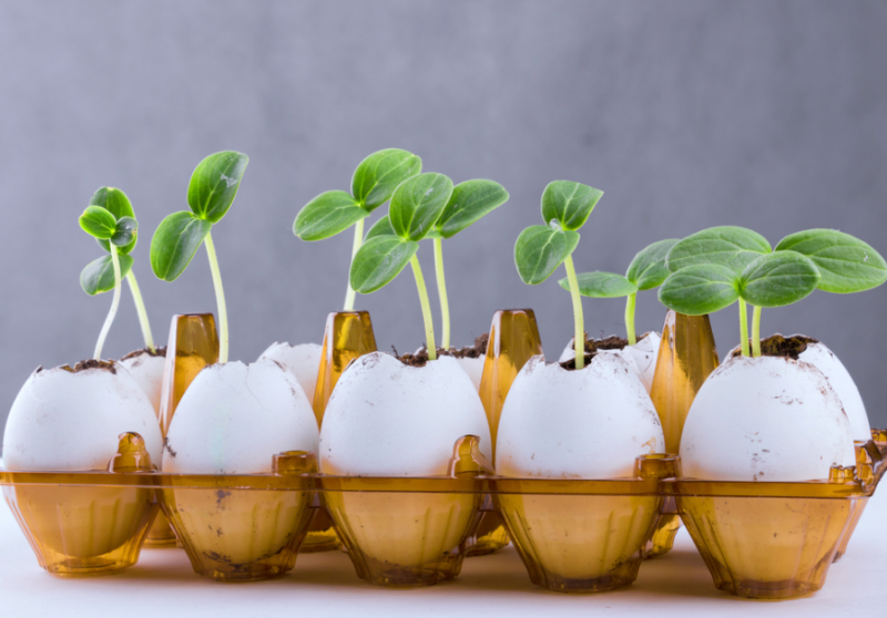 Огурцы: выращивание из семян на огороде