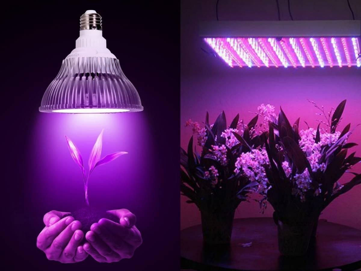 Какие лампы выбрать для рассады и как правильно досвечивать растения