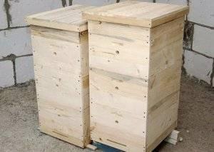 Что такое двухматочное содержание пчел в улье и как его организовать?