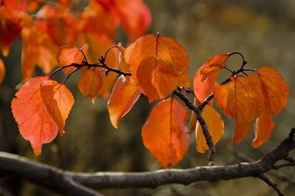Обрезка деревьев осенью: схемы, инструкция и видео для начинающих