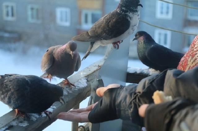 Как избавиться от голубей на балконе открытом: как отвадить с крыши, чем отпугнуть с козырька, как выгнать навсегда, что делать и как бороться, если свили гнездо?