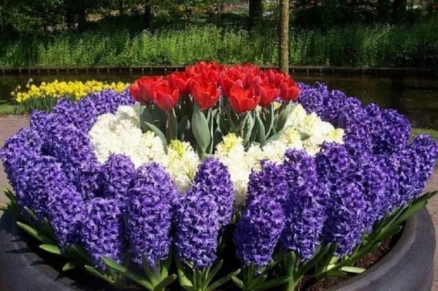 Какие луковичные цветы высаживают весной?