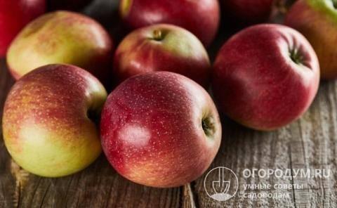 Прекрасная яблоня ола