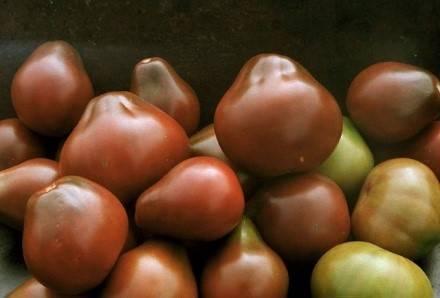 Яркий томат для консервирования – «оранжевая груша»: описание сорта, особенности выращивания