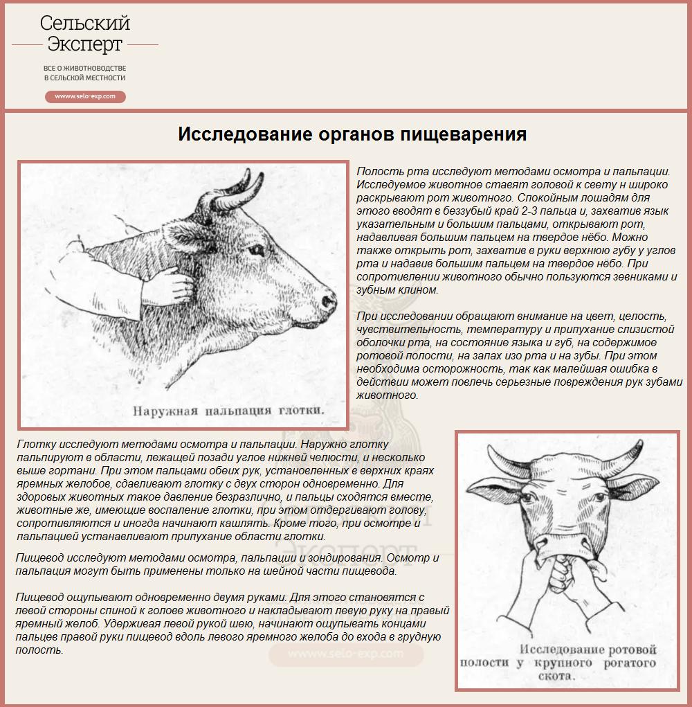 Цистицеркоз (финноз) крс: возбудитель, симптомы, лечение и профилактика