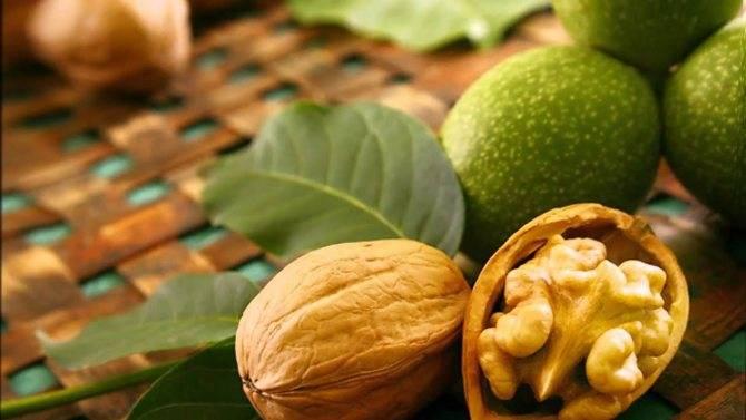 Когда и как цветет грецкий орех? почему нет бутонов и как это исправить?