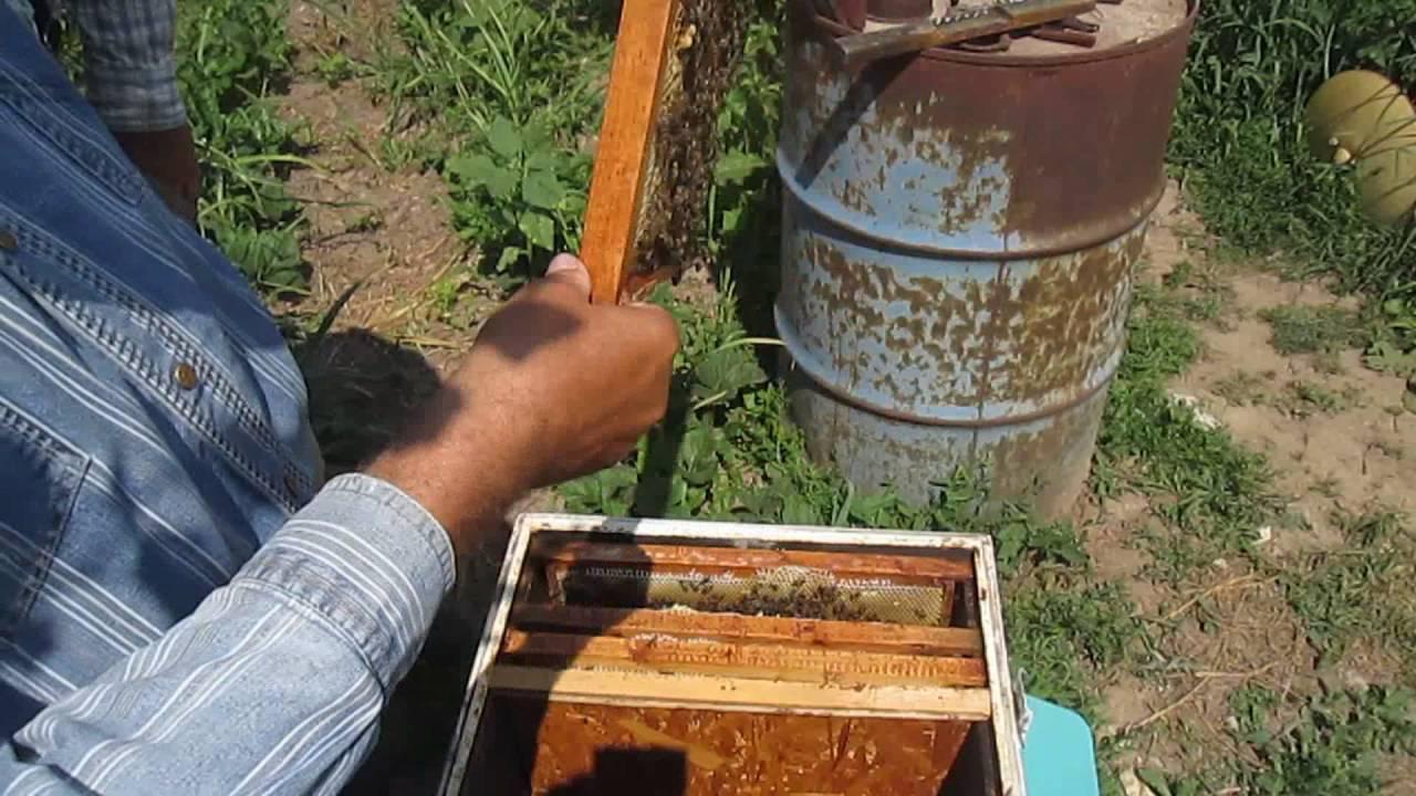Простые способы отводки пчёл