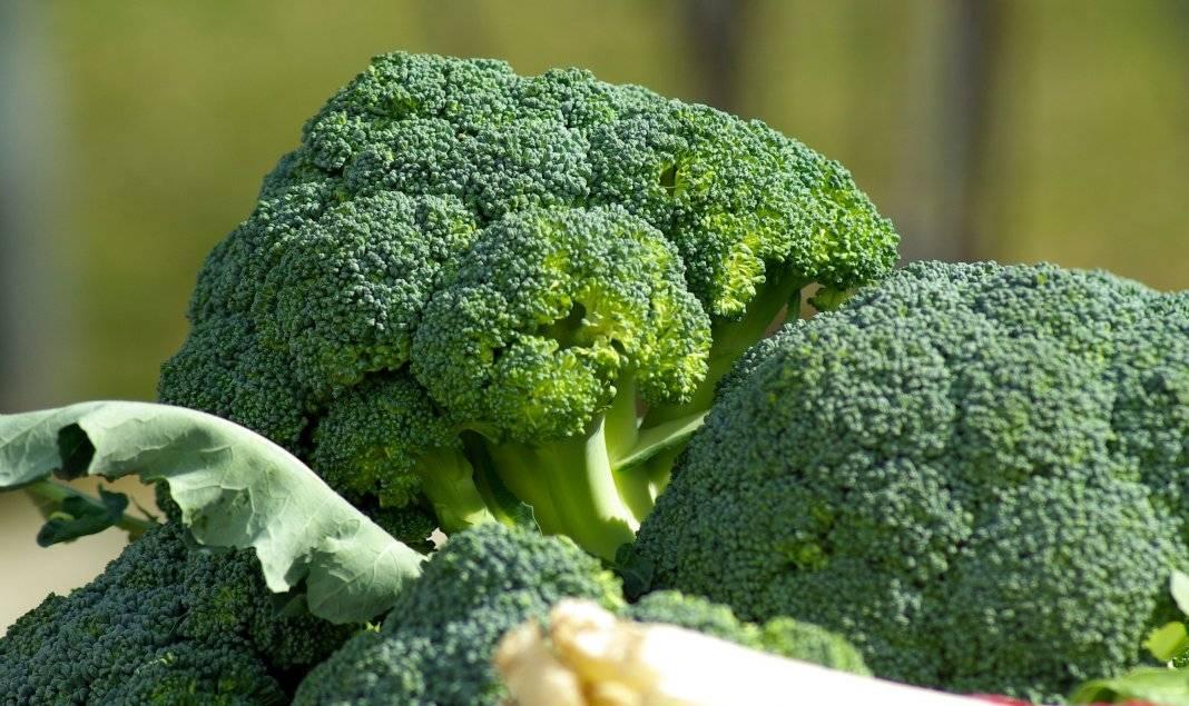 Сорт капусты подарок: описание, агротехника выращивания