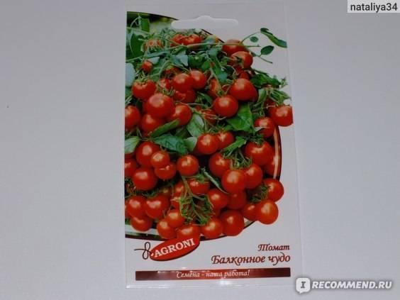 Наслаждайтесь томатами «балконное чудо» круглый год! как вырастить в домашних условиях из семян и все тонкости выращивания помидоров