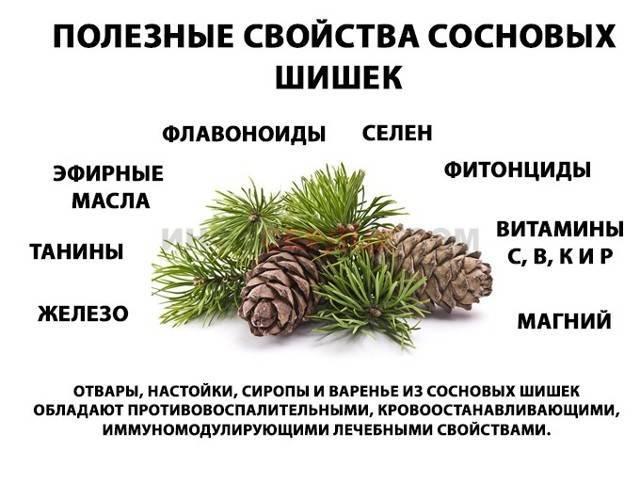 От каких болезней применяется настойка из сосновых шишек на водке, лечебные свойства народного средства