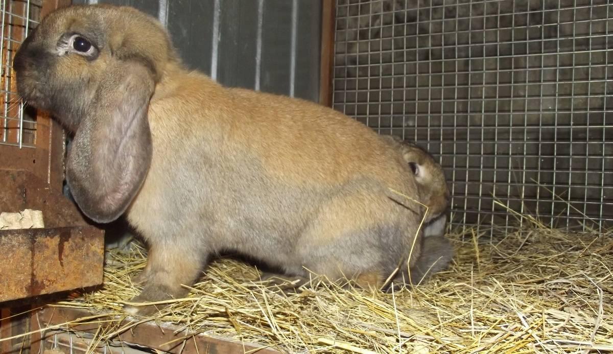 Болезни кроликов – признаки, типы, лечение, профилактика