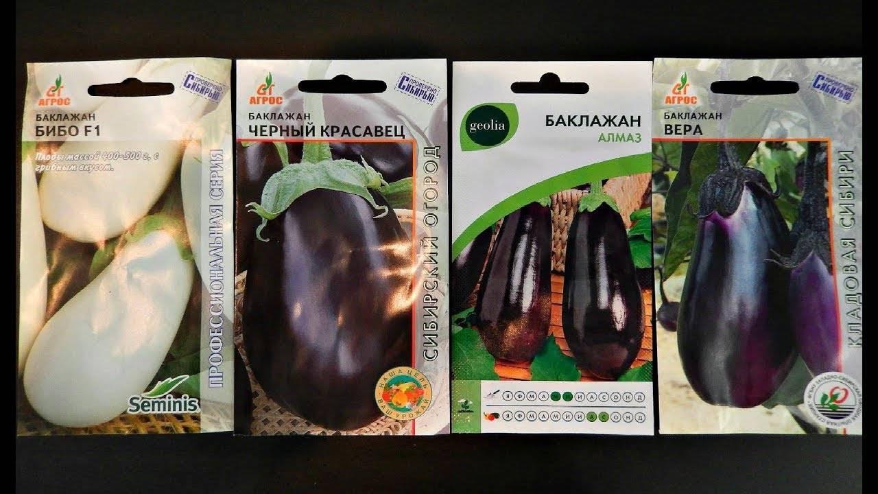 Баклажан багира f1 — описание сорта, отзывы, характеристика и урожайность
