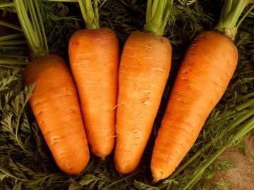 Какие сорта моркови лучшие для длительного хранения на зиму? выбираем и заготавливаем правильно