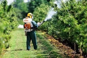 Болезни коры плодовых деревьев и их лечение