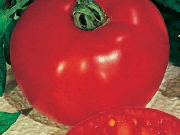Сорт томатов f1: характеристика, описание и отзывы