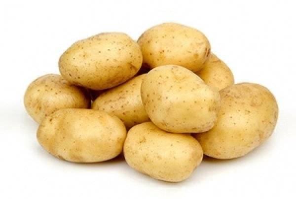 Картофель лидер — изучаем детально