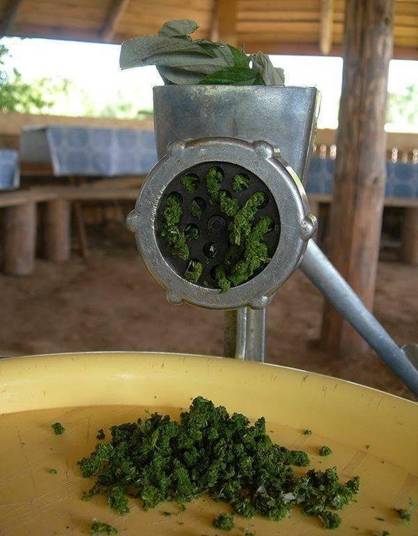 Как приготовить чай из листьев смородины и чем он полезен для организма
