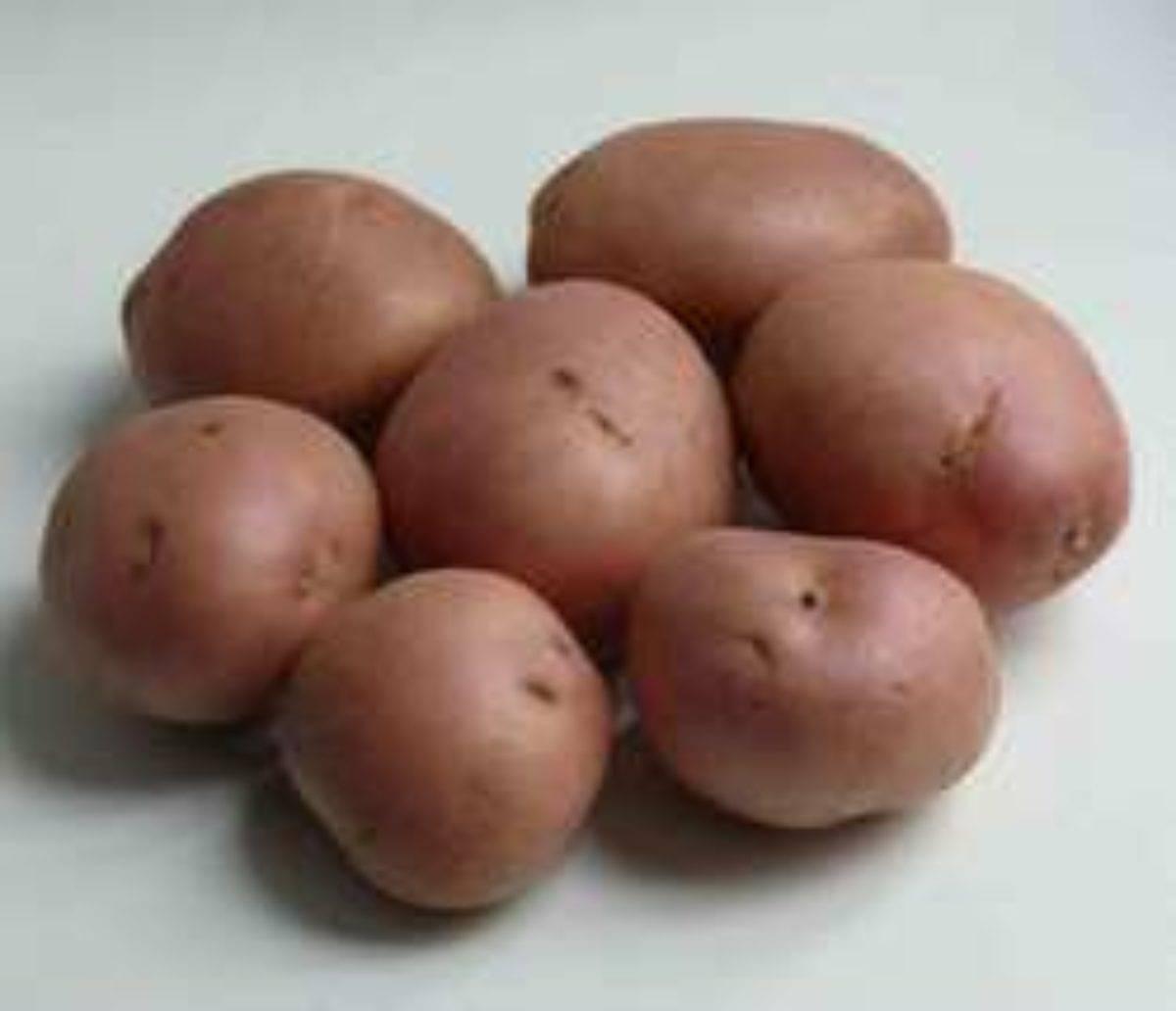 Картофель романце: описание сорта, характеристики, достоинства, сроки и правила посадки, агротехника, отзывы