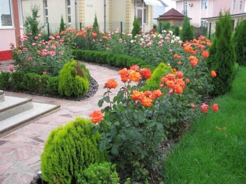 Розы в ландшафтном дизайне: 75 фото, преимущества и недостатки