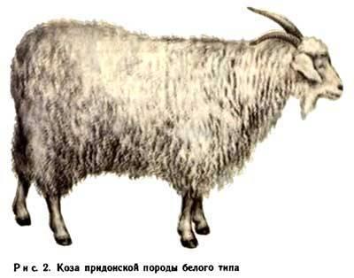 Молочные породы коз