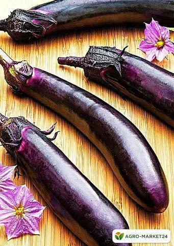 Описание, характеристика и особенности выращивания баклажана король рынка f1