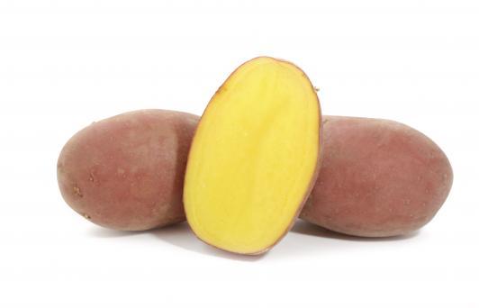 Картофель ред скарлетт: описание сорта, фото, отзывы