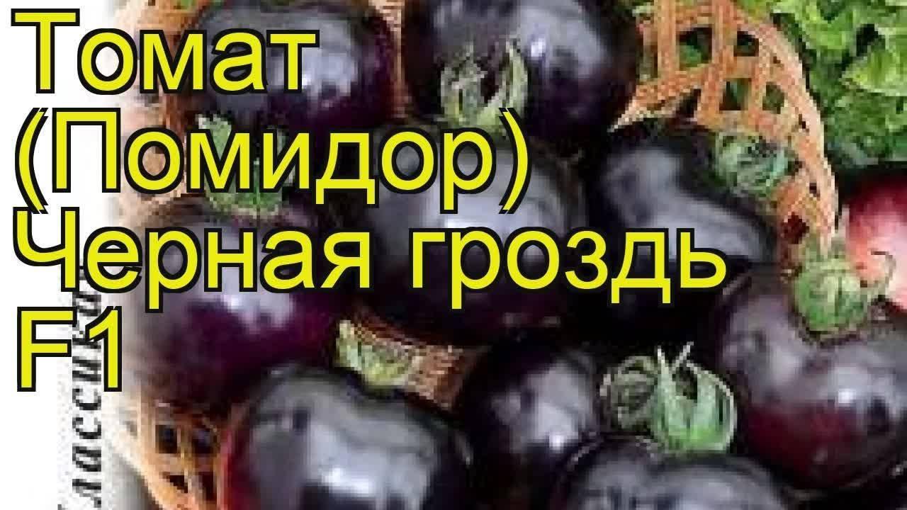 Томат гроздевой f1: описание и характеристика сорта