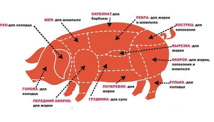 Крестец у свиньи