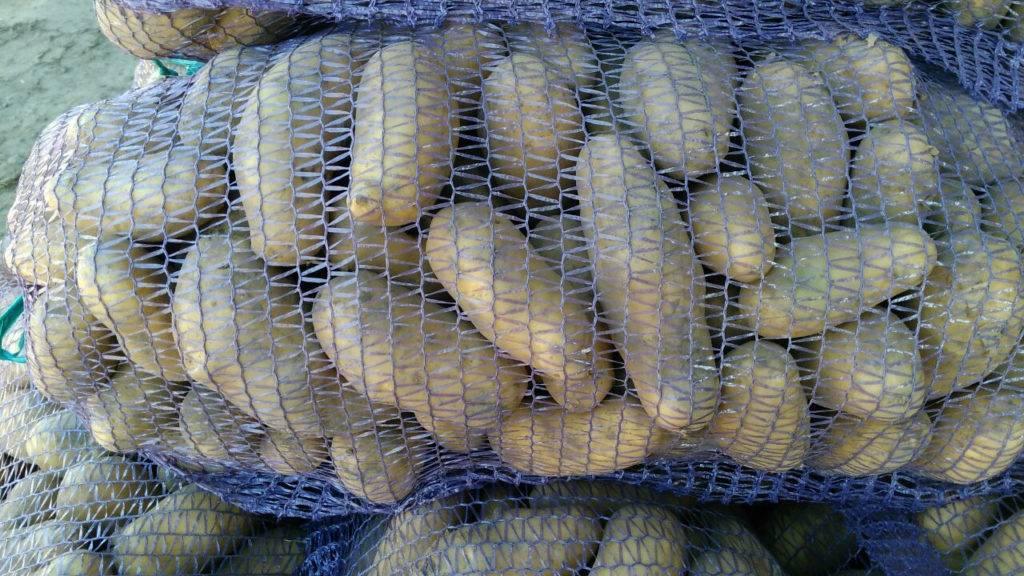 Особенности выращивания картофеля сорта гранада