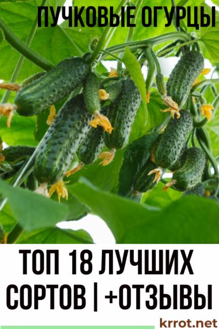 Огурец «мальчик с пальчик» для теплиц, открытого грунта и домашнего выращивания