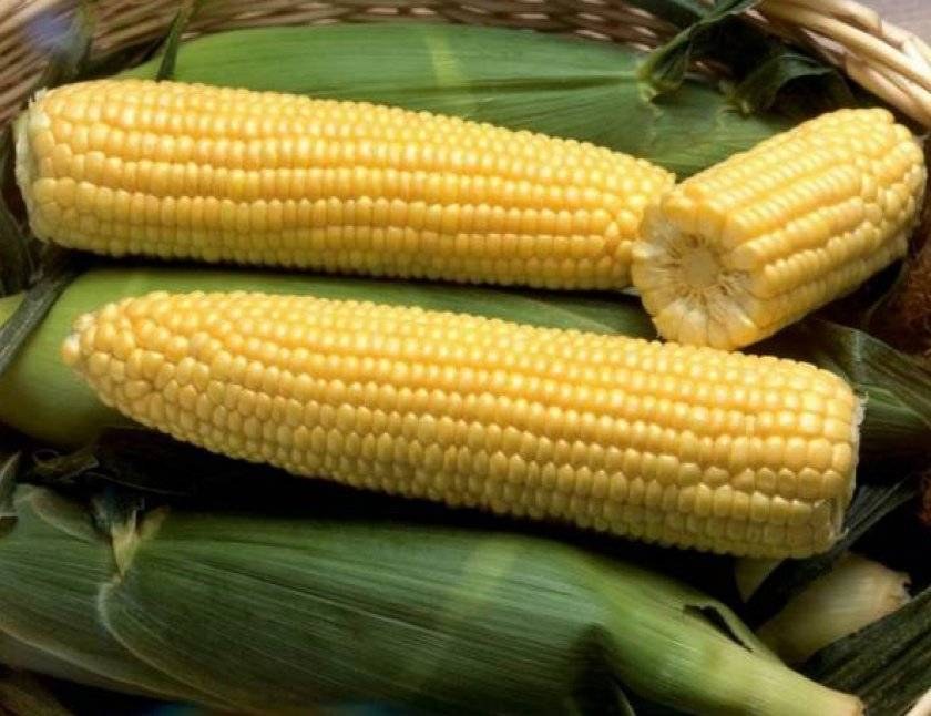 Можно ли сделать попкорн из обычной кукурузы. попкорн в домашних условиях из кукурузы на сковороде