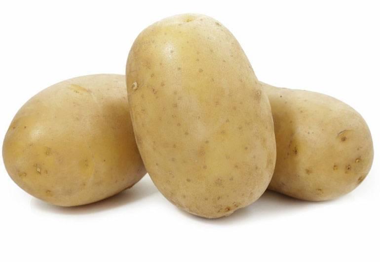 Сорт картофеля невский характеристика