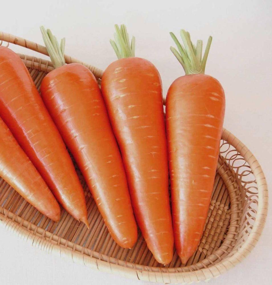 Морковь император: описание сорта, отзывы, фото