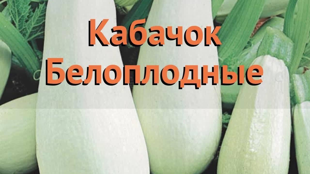 Обзор популярных сортов кабачков