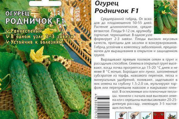 Сорт огурцов родничок f1