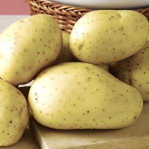 Особенности выращивания и ухода за сортом картофеля великан