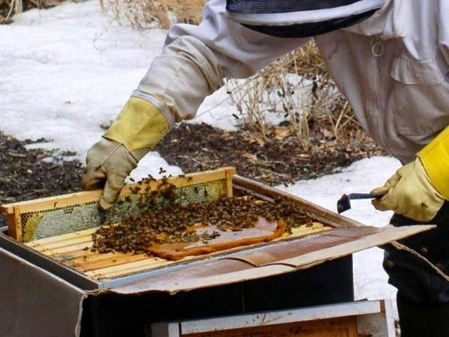 Сахарный сироп для пчел, пропорции приготовления