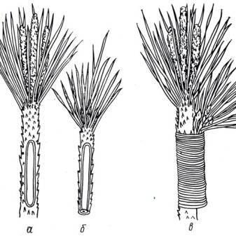Можжевельник: оптимальные способы размножения