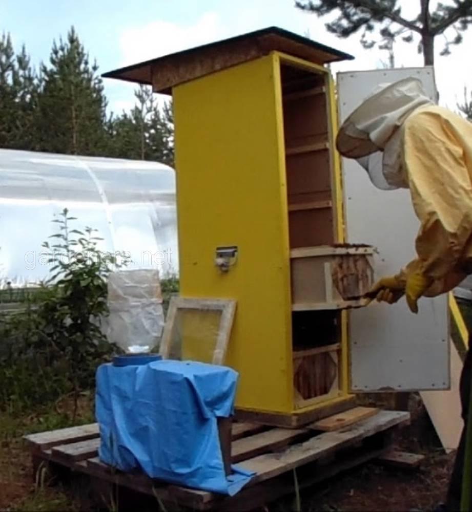 Как содержать пчел в десятирамочных ульях