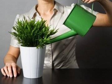 Удобрение кемира – отличная эффективность и доступные цены. питательные гидропонные растворы из удобрения кемира меры безопасности при использовании кемиры