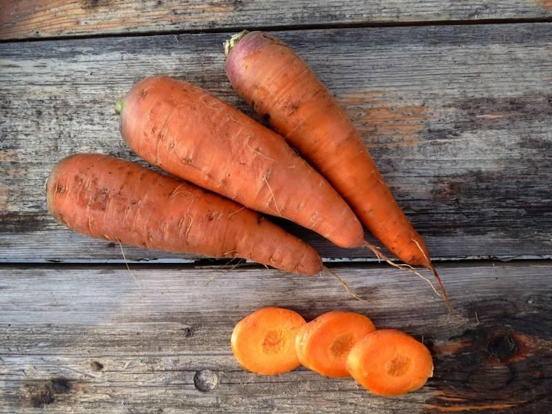 Сорта моркови для хранения на зиму: какой лучше выбрать для длительного содержания, о ранних, средних и поздних, сладких видах овоща, как подобрать для сибири и урала?